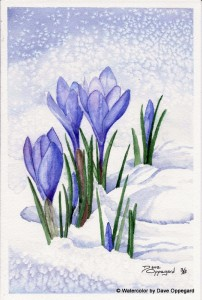 Crocus_in_the_Snow_id146